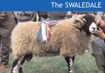 The Swaledale