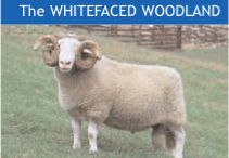 The Whitefaced Woodland